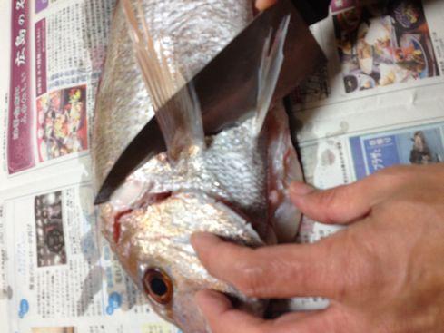鯛(頭を落とす)