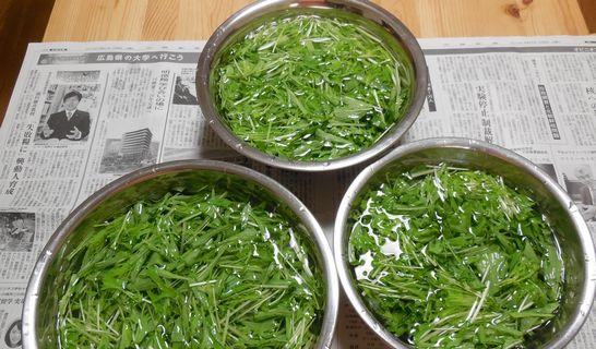 水菜(水にさらす)