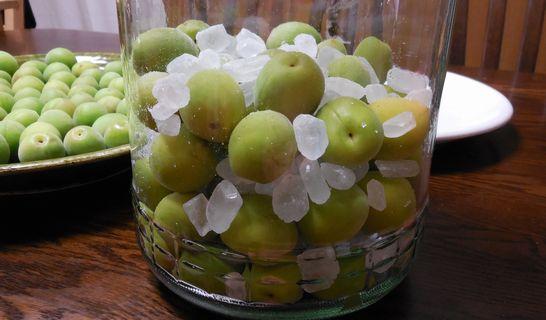 梅の実と氷砂糖(交互)