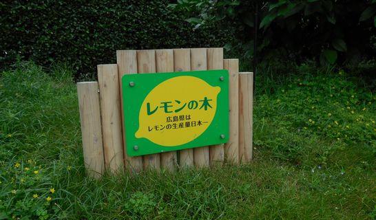 レモンの木(看板)