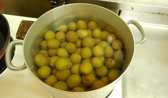 梅の実を煮る