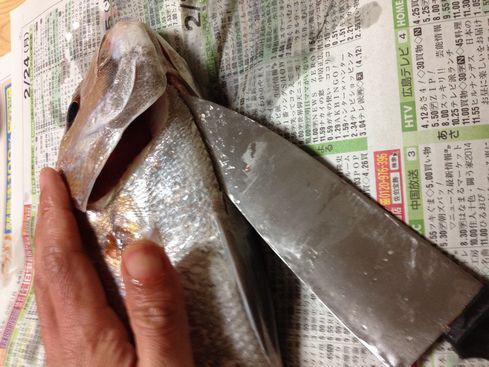 鯛(腹開き)