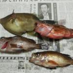 瀬戸内海の魚