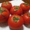 世羅のトマト